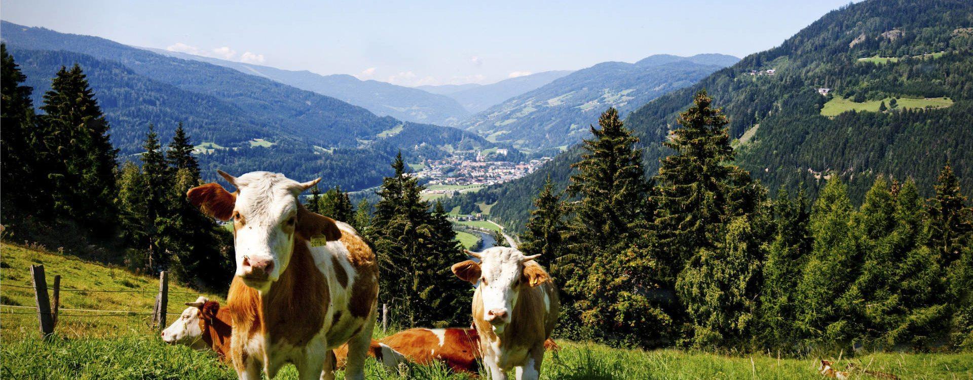 Unsere Tiere - Vitalhof Rohrer Ferienwohnungen